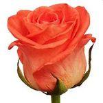 Троянди поштучно - цветы и букеты на salonroz.com