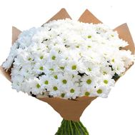 35 white daisies in a bouquet - flowers and bouquets on salonroz.com