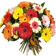 51 gerberas in bouquet - flowers and bouquets on salonroz.com
