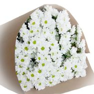 Bouquet of 13 white shrub chrysanthemums - flowers and bouquets on salonroz.com