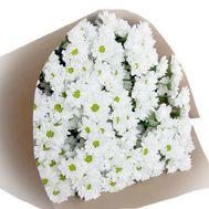 Букет из 13 белых  кустовых хризантем - цветы и букеты на salonroz.com