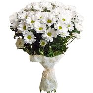 Bouquet of 11 white chrysanthemums - flowers and bouquets on salonroz.com