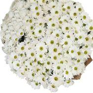 Класний букет ромашок - цветы и букеты на salonroz.com