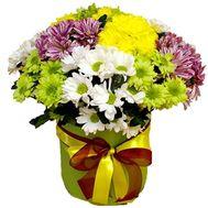Хризантемы в коробке - цветы и букеты на salonroz.com