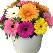 Композиция из гербер в коробке - цветы и букеты на salonroz.com