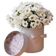 Коробка с ромашками - цветы и букеты на salonroz.com