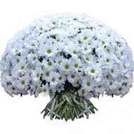 101 white chamomile bacardi - flowers and bouquets on salonroz.com