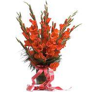 15 Red Gladiolus - flowers and bouquets on salonroz.com