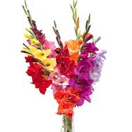 15 multicolored gladioli - flowers and bouquets on salonroz.com