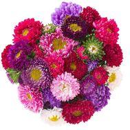 25 разноцветных астр - цветы и букеты на salonroz.com