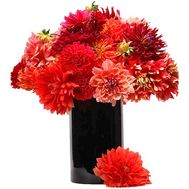 31 multi-colored dahlia - flowers and bouquets on salonroz.com