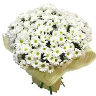 55 white chamomile chrysanthemums - flowers and bouquets on salonroz.com