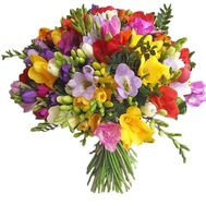 55 exotic freesias - flowers and bouquets on salonroz.com