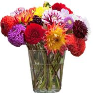 Large bouquet of dahlias - flowers and bouquets on salonroz.com