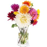 Bouquet of 11 dahlias - flowers and bouquets on salonroz.com