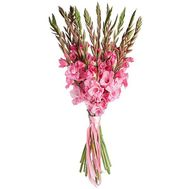 Bouquet of pink gladiolus - flowers and bouquets on salonroz.com