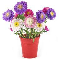 Букетик из астр для девушки - цветы и букеты на salonroz.com