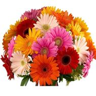 Beautiful bouquet of gerberas - flowers and bouquets on salonroz.com