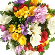 Colorful bouquet of freesias - flowers and bouquets on salonroz.com