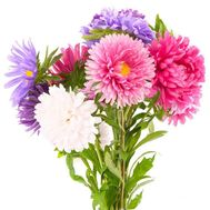 Маленький букет астр - цветы и букеты на salonroz.com