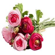 A small bouquet of Ranunculus - flowers and bouquets on salonroz.com