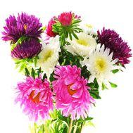 Милый букет астр - цветы и букеты на salonroz.com
