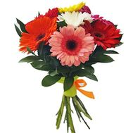 A small bouquet of gerberas - flowers and bouquets on salonroz.com