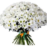 A huge bouquet of chamomile chrysanthemums - flowers and bouquets on salonroz.com