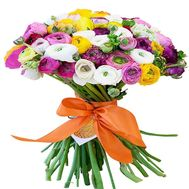 Luxurious bouquet of Ranunculus - flowers and bouquets on salonroz.com