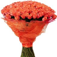 151 coral rose - flowers and bouquets on salonroz.com