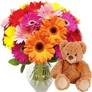 25 gerberas and teddy bear - flowers and bouquets on salonroz.com