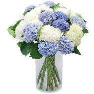 25 шикарных гортензий - цветы и букеты на salonroz.com