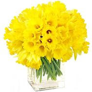 Large bouquet of daffodils - flowers and bouquets on salonroz.com