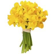 Bouquet of 31 yellow narcissus - flowers and bouquets on salonroz.com