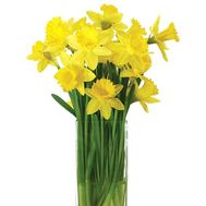 Bouquet of daffodils - flowers and bouquets on salonroz.com