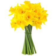 Daffodils in a bouquet - flowers and bouquets on salonroz.com