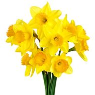 A small bouquet of daffodils - flowers and bouquets on salonroz.com