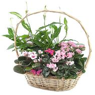 Gift basket with room colors - flowers and bouquets on salonroz.com