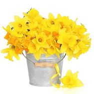 Golden bouquet of daffodils - flowers and bouquets on salonroz.com