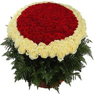 Bouquet of 501 red and white roses - flowers and bouquets on salonroz.com
