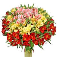 Bouquet of flowers from 55 multi-colored alstromeries - flowers and bouquets on salonroz.com