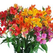 Bouquet of flowers from 21 multi-colored alstroemerias - flowers and bouquets on salonroz.com