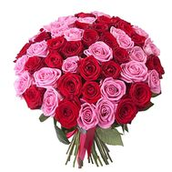 Bouquet of 55 red and pink roses - flowers and bouquets on salonroz.com