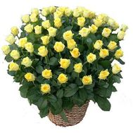 Basket of 71 yellow roses - flowers and bouquets on salonroz.com