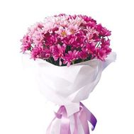 Bouquet of 9 pink chrysanthemums - flowers and bouquets on salonroz.com