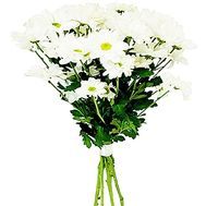 Bouquet of 5 chamomiles - flowers and bouquets on salonroz.com
