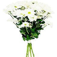 Букет из 5 ромашек - цветы и букеты на salonroz.com