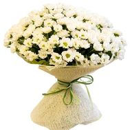 Bouquet of 31 chamomile chrysanthemums - flowers and bouquets on salonroz.com