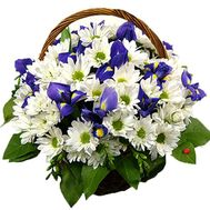 Basket of flowers from 13 chrysanthemums and 6 irises - flowers and bouquets on salonroz.com