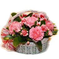Basket of flowers from 13 carnations - flowers and bouquets on salonroz.com
